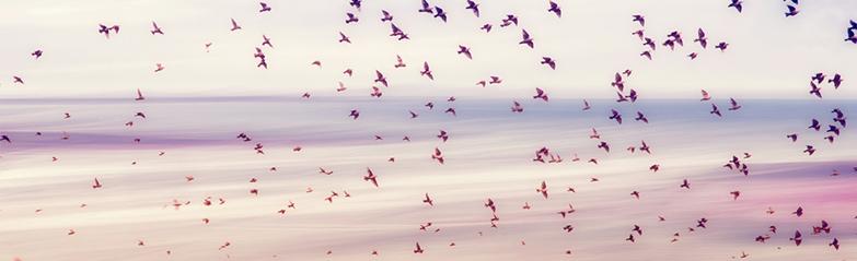birds-dina-long